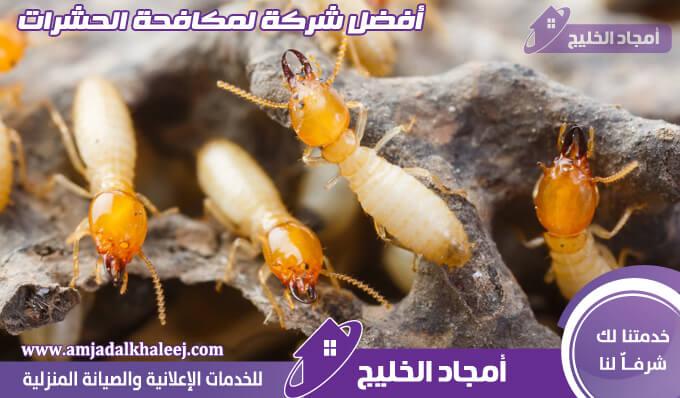 شركة مكافحة النمل الابيض بالمدينة المنورة وأفضل طرق رش للنمل الأبيض