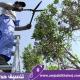 عامل قص اشجار بجدة متخصص في تقطيع وتقليمك وتجميل الأشجار وخدماته متاحة بأقل سعر