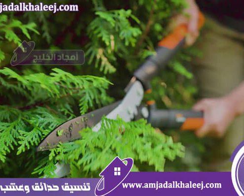 عامل قص اشجار بالجبيل يقدم كافة أعمال تنسيق اشجار لدى أفضل شركة ازالة اشجار بالجبيل والشرقية